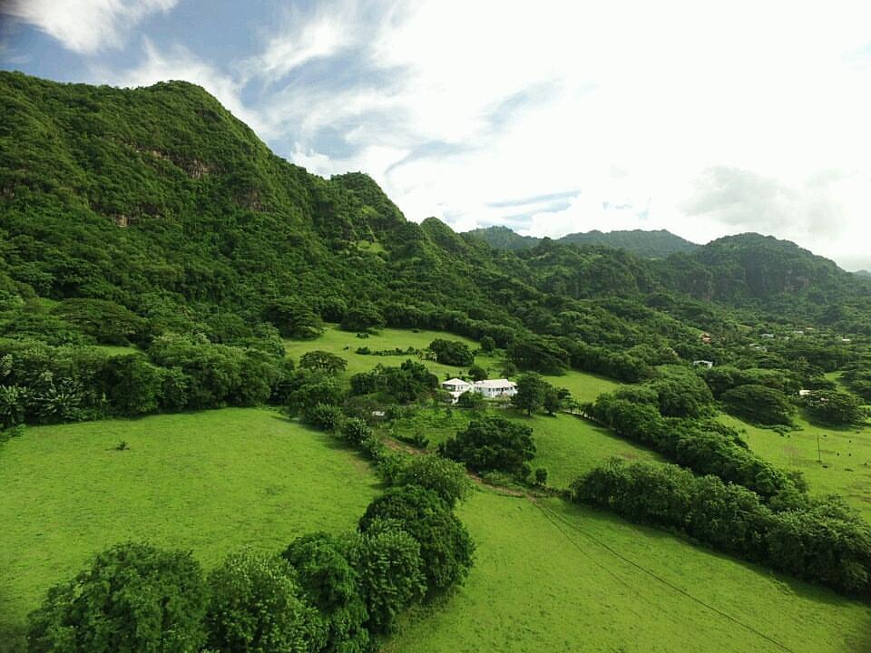 Lush Vegetation of St. Vincent